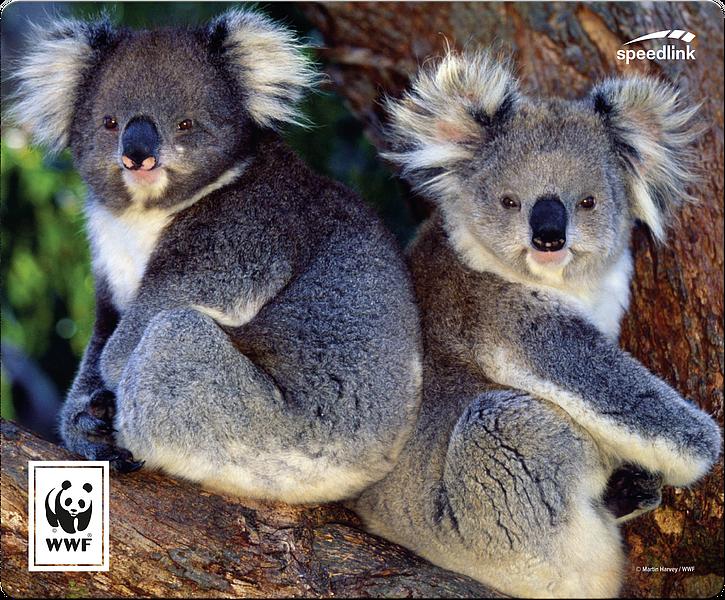 TERRA WWF Mousepad, Koala